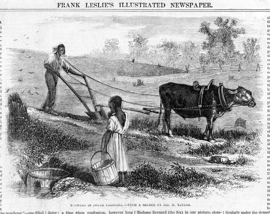 1860s Photograph - Plowing In South Carolina.  African by Everett