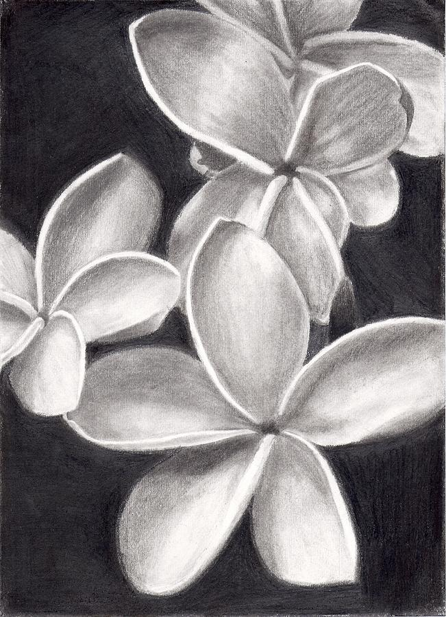 9bbc318faf99d Floral Drawing - Plumeria In Black And White by Amanda Rhone