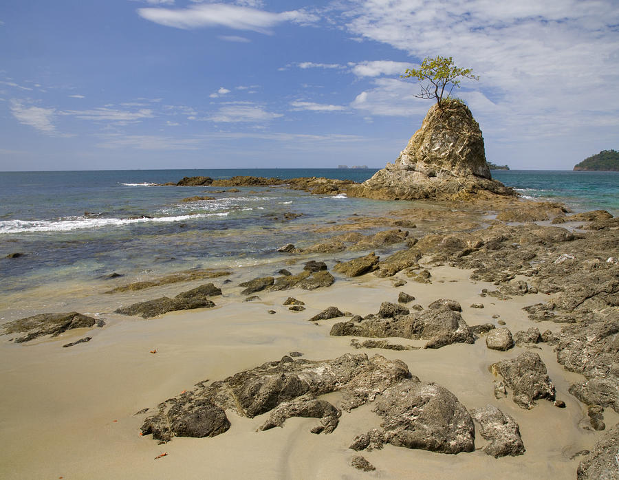 Point With Tree On Penca Beach Costa Photograph by Tim Fitzharris