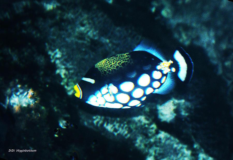 Fish Photograph - Polka Dot Fish by DiDi Higginbotham