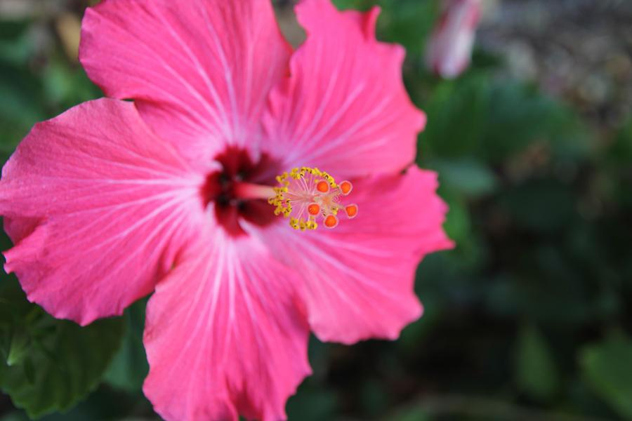 Florida Photograph - Pollinate Flower. by Giancarlo Sherman