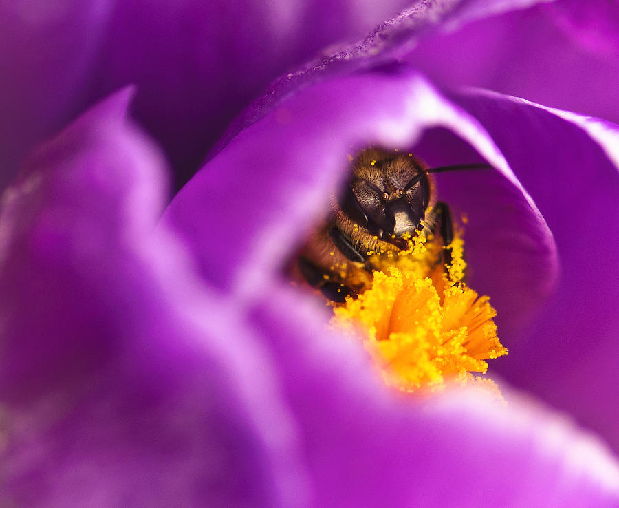 Pollination Photograph - Pollination Party Of One by Vicki Jauron