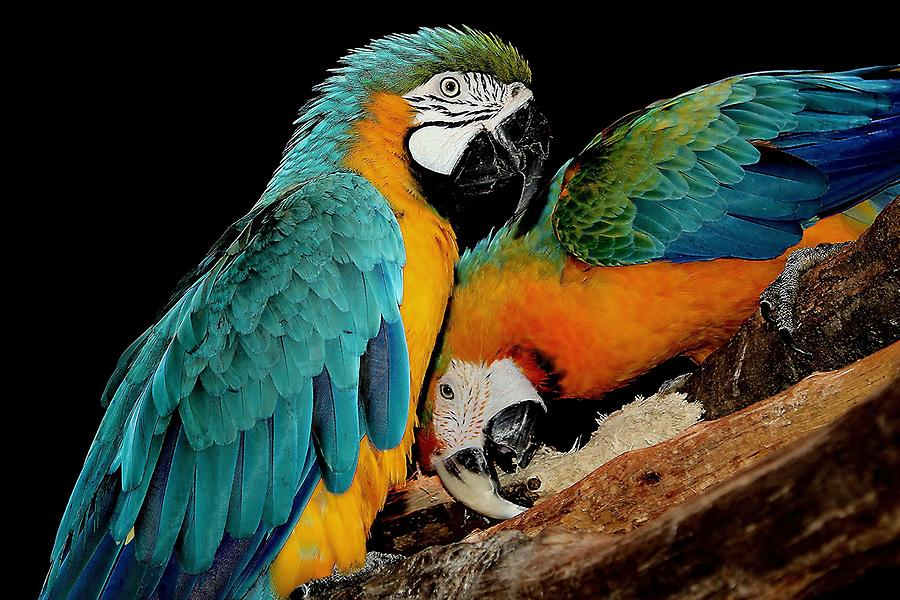 Parrot Photograph - Poly Wants A Cracker by Paulette Thomas