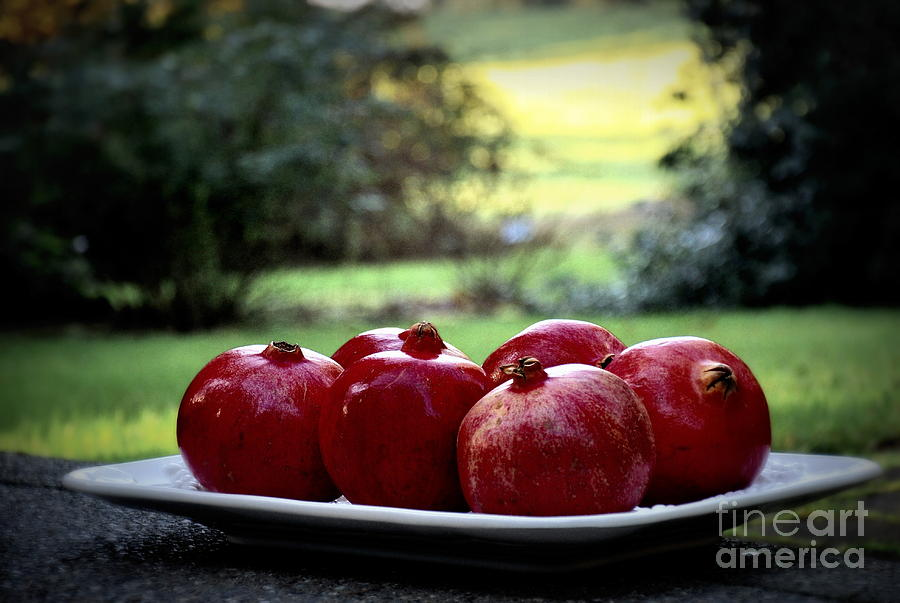 Nature Photograph - Pomegranates On White Platter 3 by Tanya  Searcy