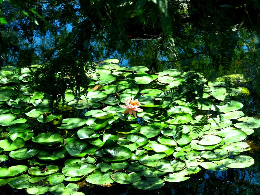 Pond Photograph - Pond With With Pond Lilly by David Killian