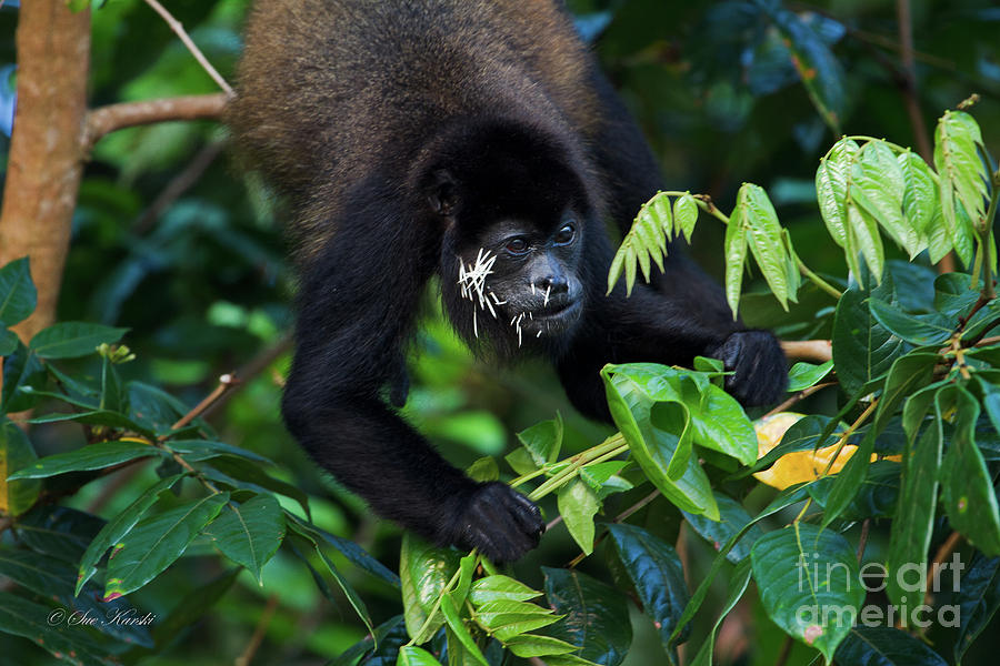 Costa Rica Photograph - Poor Guy by Sue Karski