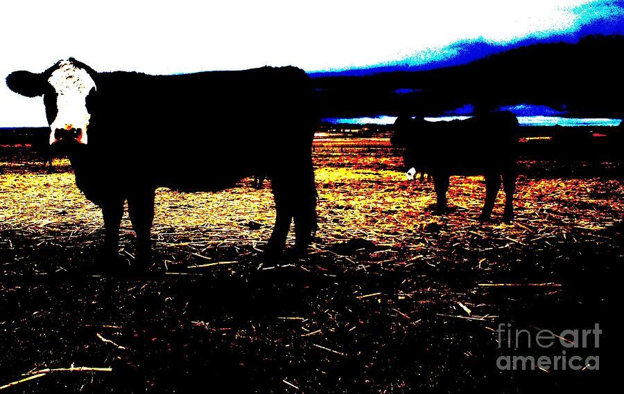 Calf Photograph - Pop Art Calves by Therese Alcorn