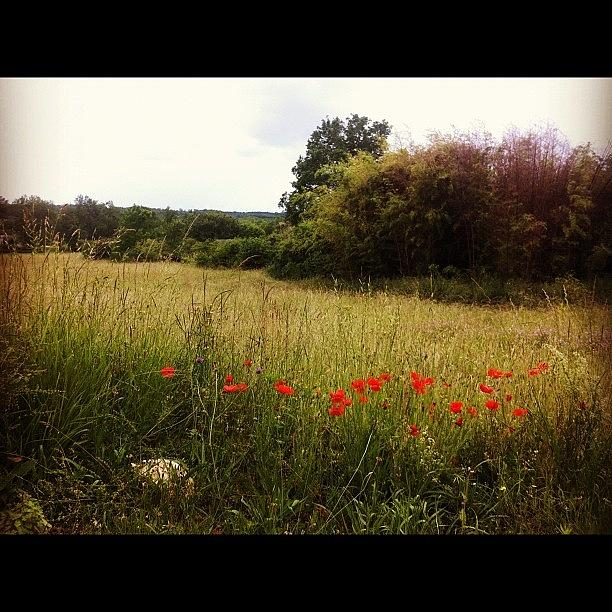 Poppies Photograph by Jane  Speight