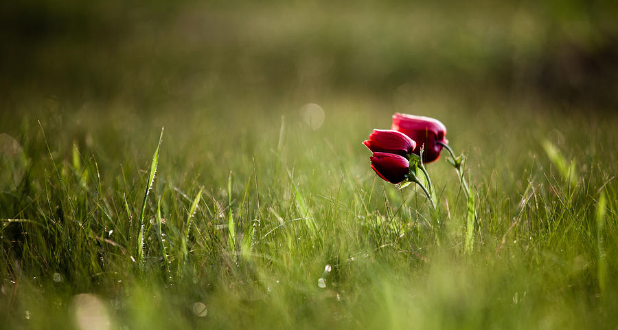 Green Photograph - Popping Red by Victor Bezrukov