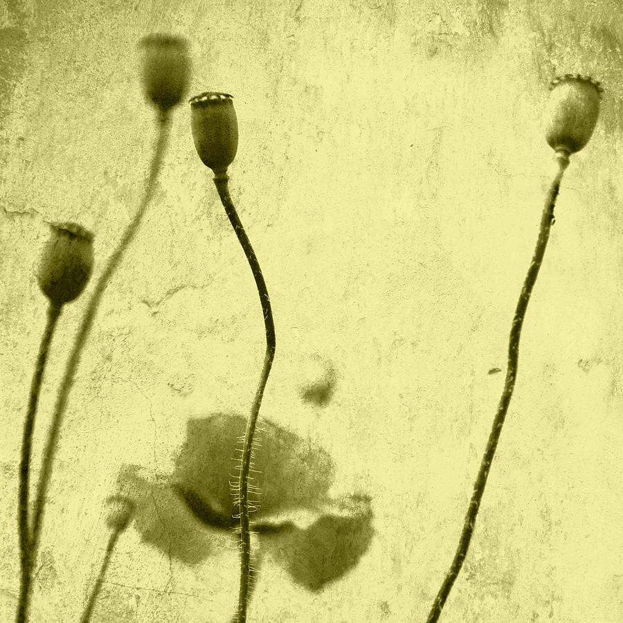 Mohn Photograph - Poppy Art Image by Falko Follert