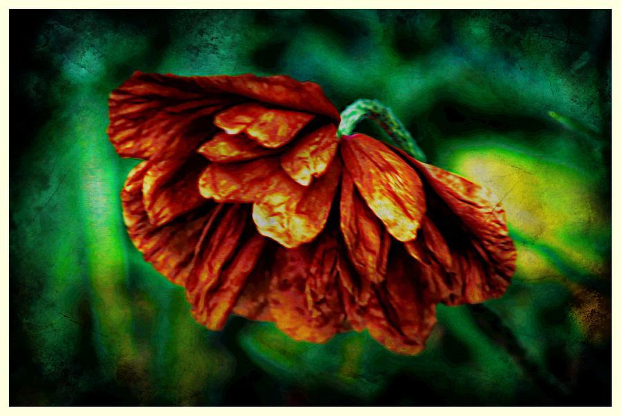 Poppy Photograph - Poppy Art by Jennifer Kosminskas
