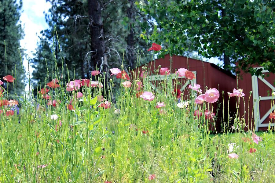 Poppies Photograph - Poppy Field by Myrna Migala