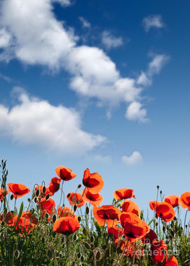 Poppy Photograph - Poppy Flowers 04 by Nailia Schwarz