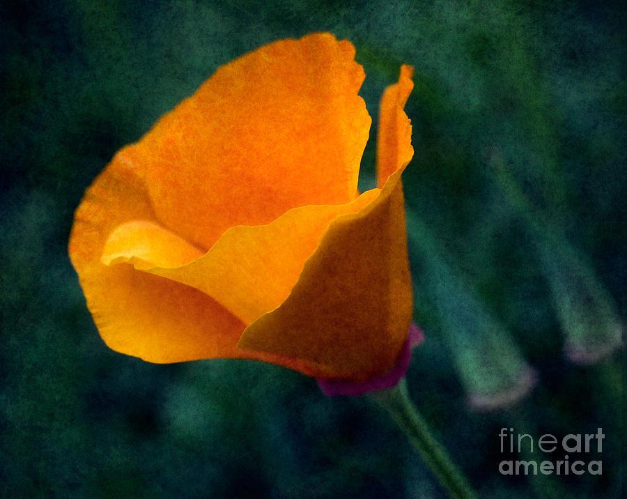Poppy Glowing Photograph by Bobbi Feasel