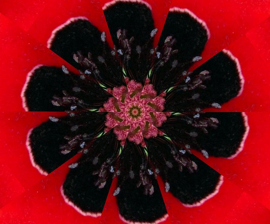Digital Digital Art - Poppy by Rhonda Barrett