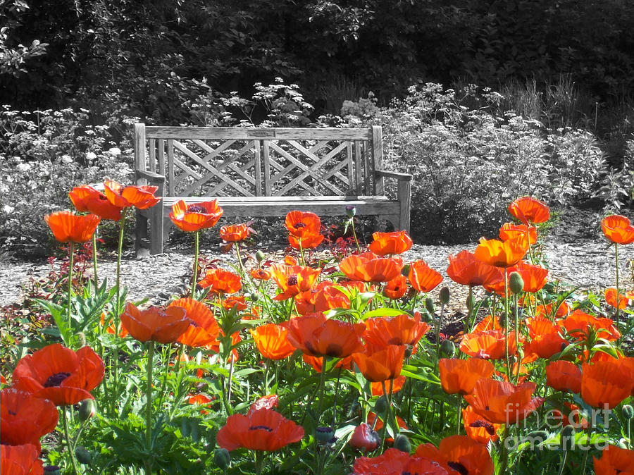 Nature Photograph - Poppy Seed Bench by Mary Mikawoz