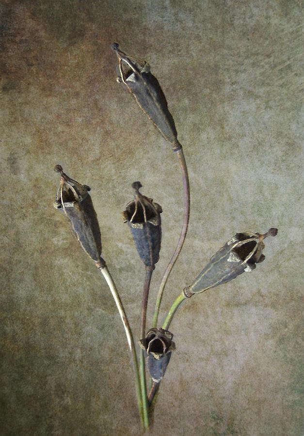 Poppy Pyrography - Poppy Seed Cases by Debra Kelday