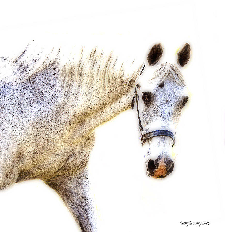 Horse Photograph - Portrait Of A Horse Series II by Kathy Jennings