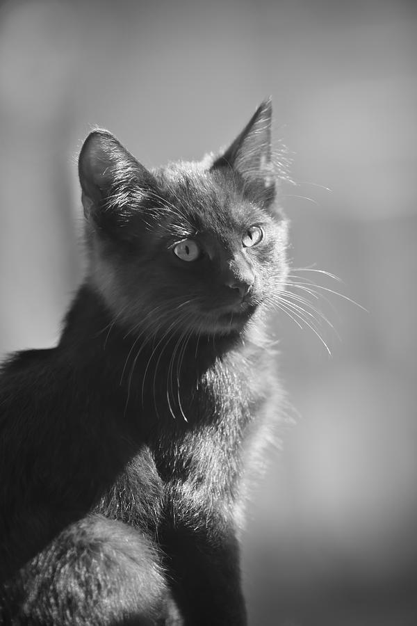 Kitten Photograph - Portrait Of A Kitty by Kim Henderson