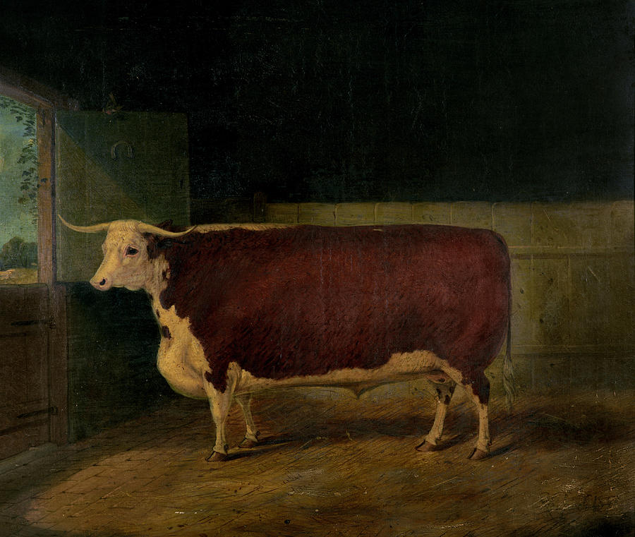 Portrait Painting - Portrait Of A Prize Hereford Steer by Richard Whitford