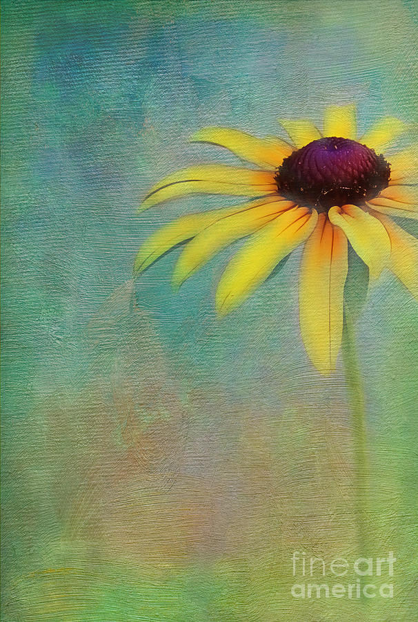 Sunflower Photograph - Portrait Of A Sunflower by Judi Bagwell