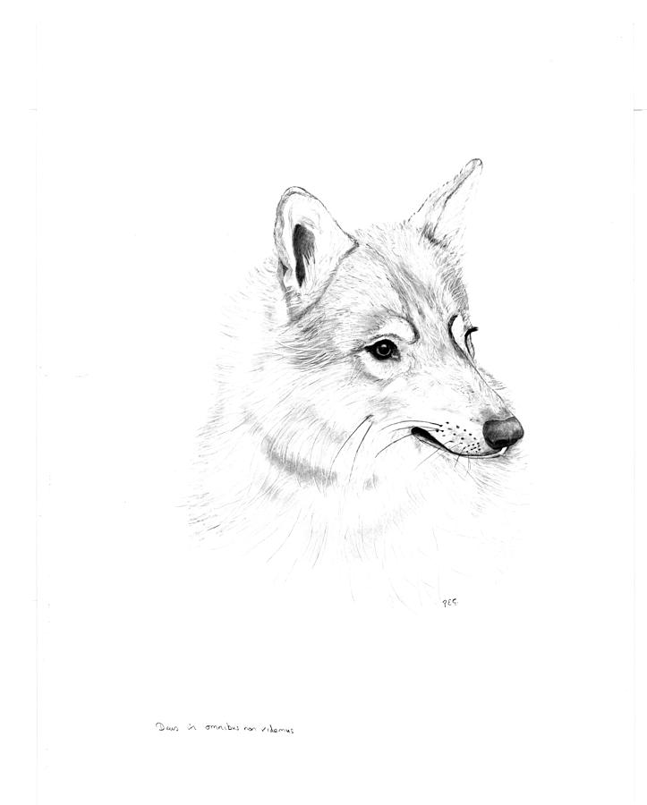 Drawing Drawing - Portrait Of A Wolf by Peter Edward Green