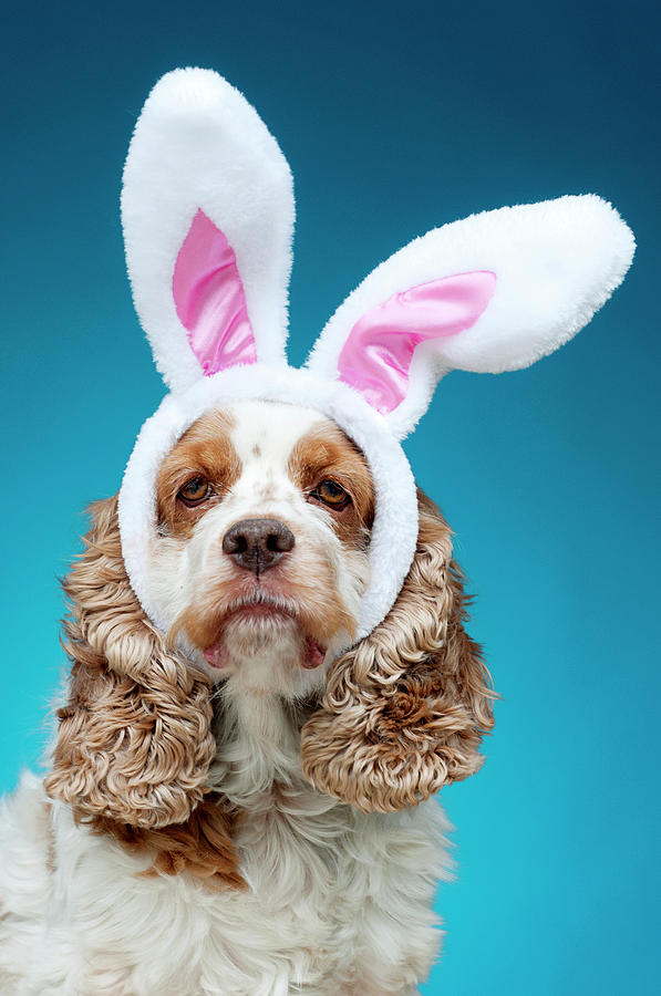 Vertical Photograph - Portrait Of Dog Wearing Easter Bunny Ears by Jade Brookbank