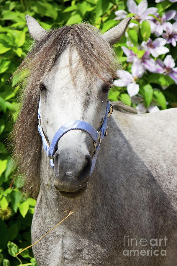 Pony Photograph - Portrait Of Lulu by Angela Doelling AD DESIGN Photo and PhotoArt