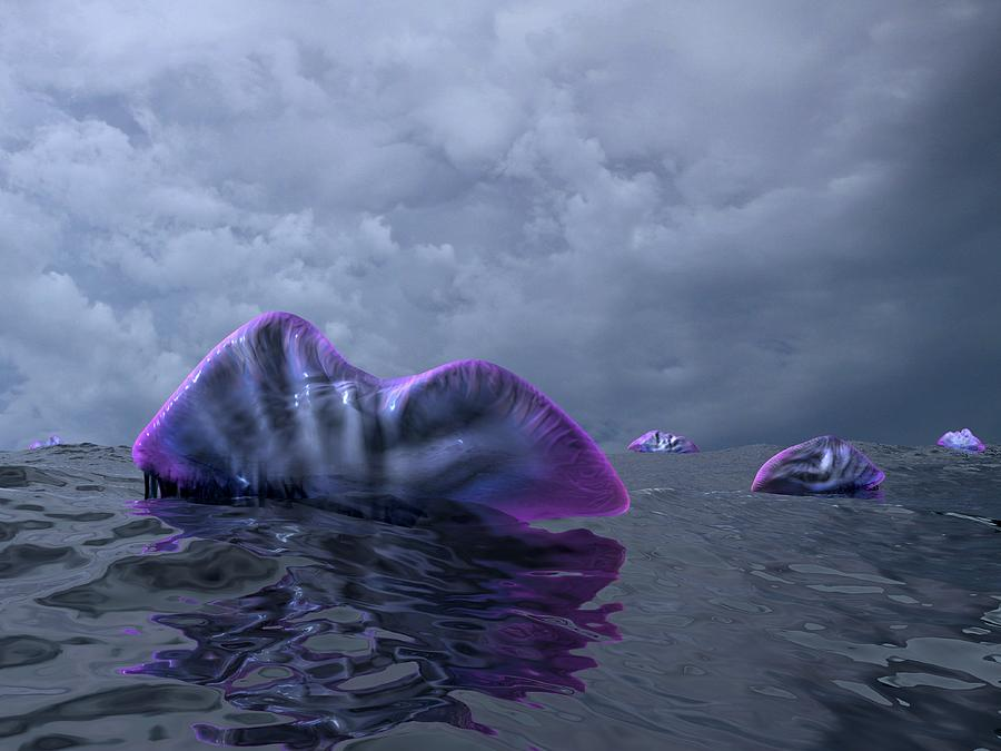 Physalia Utriculus Photograph - Portuguese Men-of-war, Artwork by Walter Myers