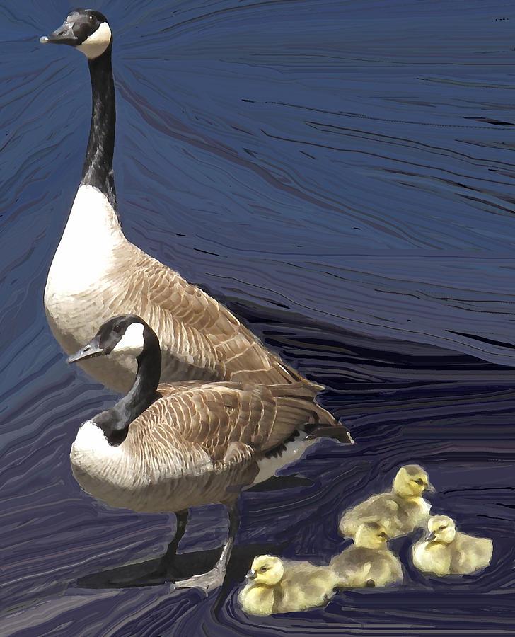 Canada Goose Photograph - Posed Family Portrait by Ian  MacDonald