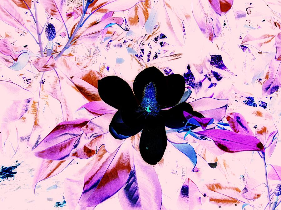 Floral Mixed Media - Positive Space by Aimee Bruno