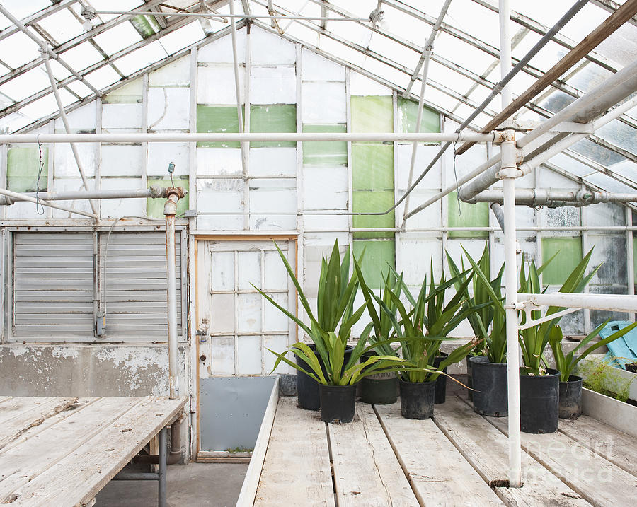 Architecture Photograph - Potted Plants In A Greenhouse by Thom Gourley/Flatbread Images, LLC