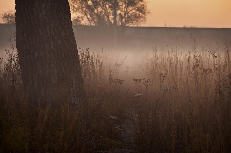 Tree Photograph - Prairie Pre Dawn by Steve Gadomski