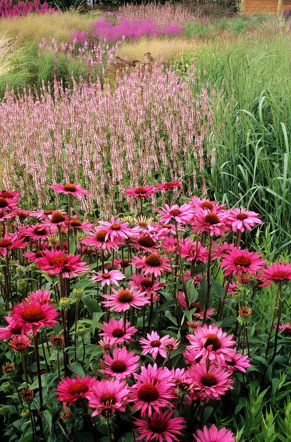 Prairie style planting garden design herbaceous for Prairie style garden design