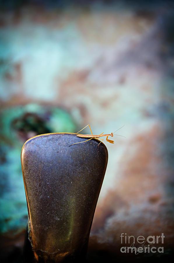 Praying Mantis Photograph - Praying For Water 1 by Andee Design