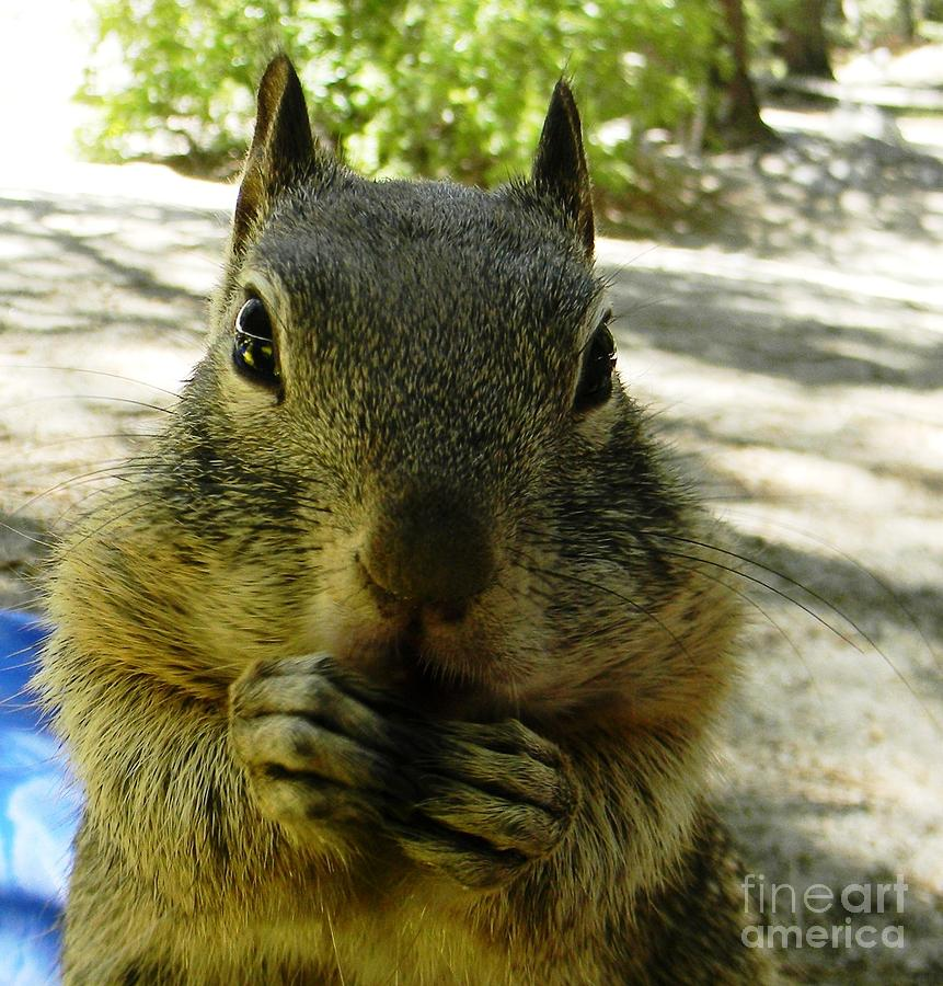 Squirrel Photograph - Praying Nuts by DJ Laughlin