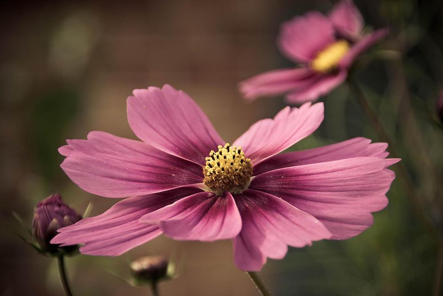 Petal Photograph - Precious Pink by Trish Tritz