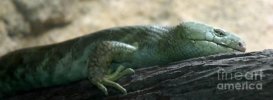 Green Photograph - Prehensil Tailed Skink by Henrik Lehnerer