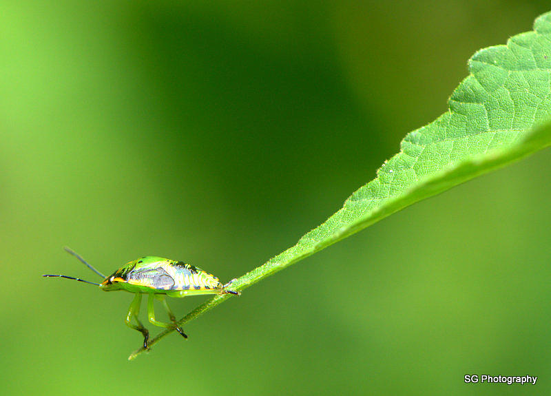 Bug Photograph - Prepare For Take Off by Samantha Gibson