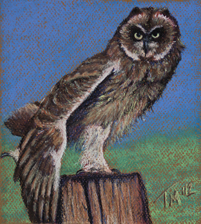 Owl Pastel - Preparing For Flight by Thomas Maynard