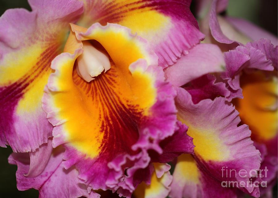 Orchid Photograph - Pretty And Colorful Orchids by Sabrina L Ryan