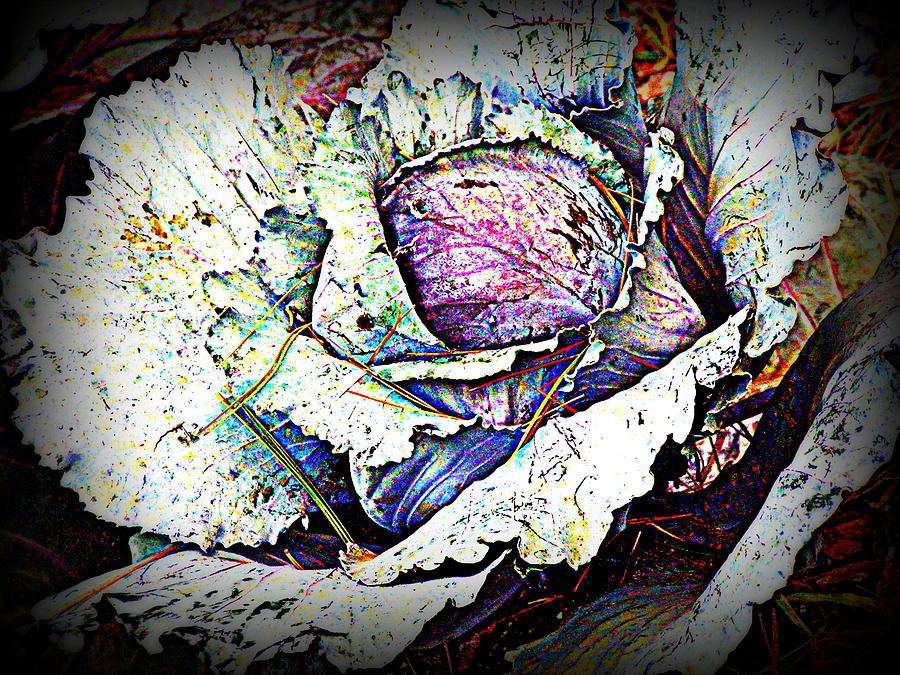 Garden Photograph - Pretty As A Flower by Selma Glunn