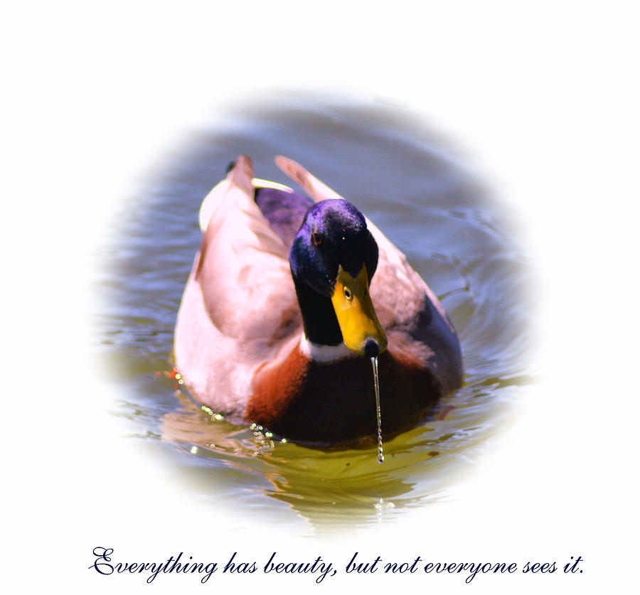 Duck Photograph - Pretty Duck by Kelly Reber