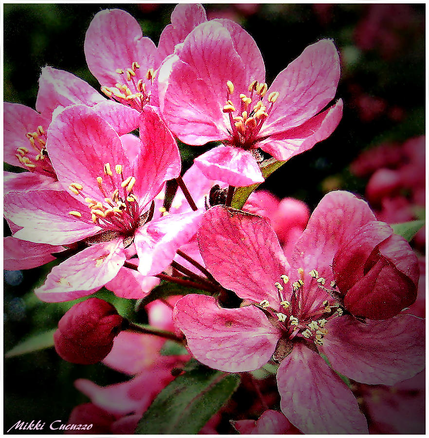Pretty In Pink Flowers Photograph By Mikki Cucuzzo