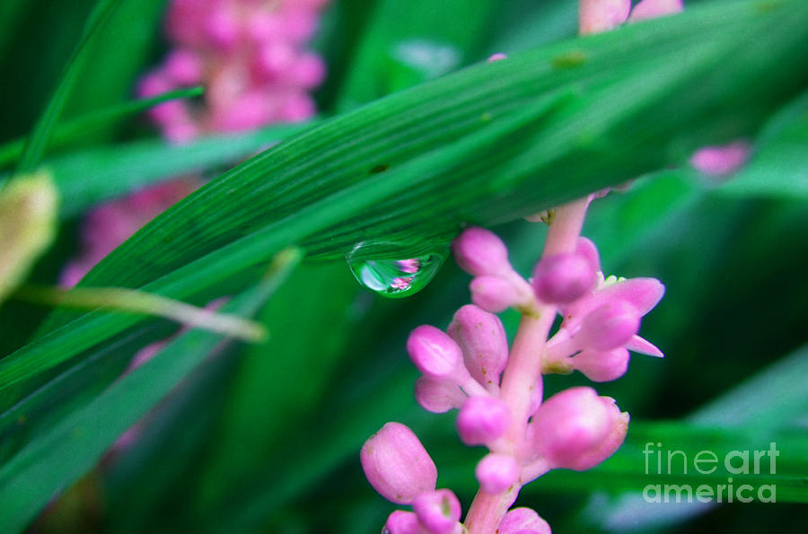 Landscape Photograph - Pretty In Pink  by Peggy Franz