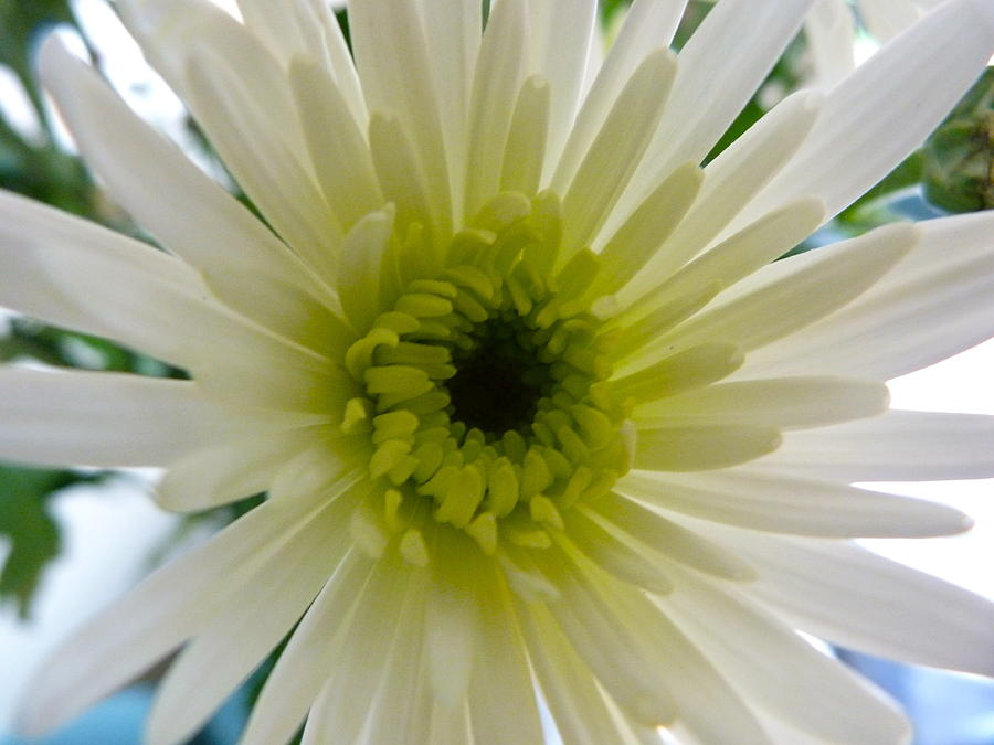 Flower Photograph - Pretty In White by Karen Grist