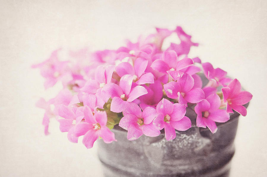 Horizontal Photograph - Pretty Pink by SKCPhotography