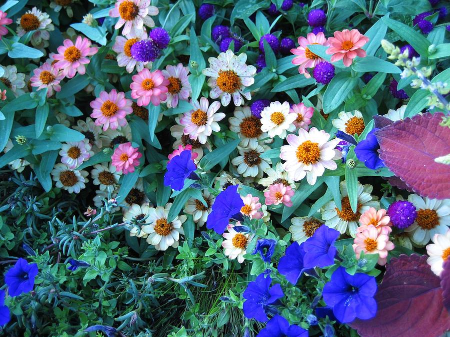 Pretty Posies by Sherry Oliver