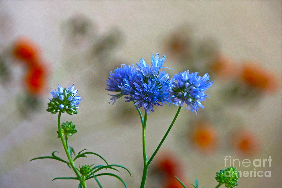 Blue Flowers Photograph - Pretty Weeds by Byron Varvarigos