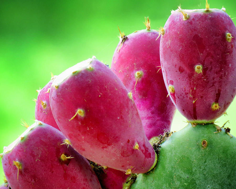 Pear Photograph - Prickly Pear by Diane Wood